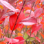 Color Wallpapers - 45347